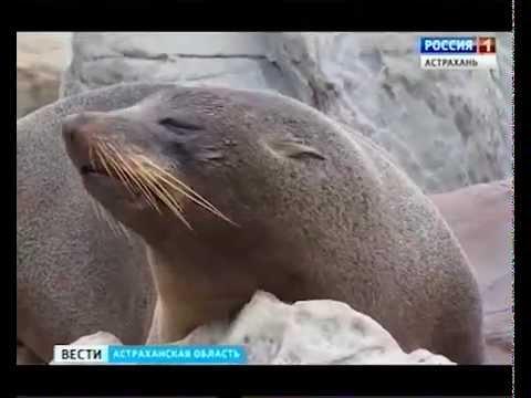 РОССИЯ-1, Астраханская обл. / RUSSIA-1, Astrakhan Oblast / 12.10.2015