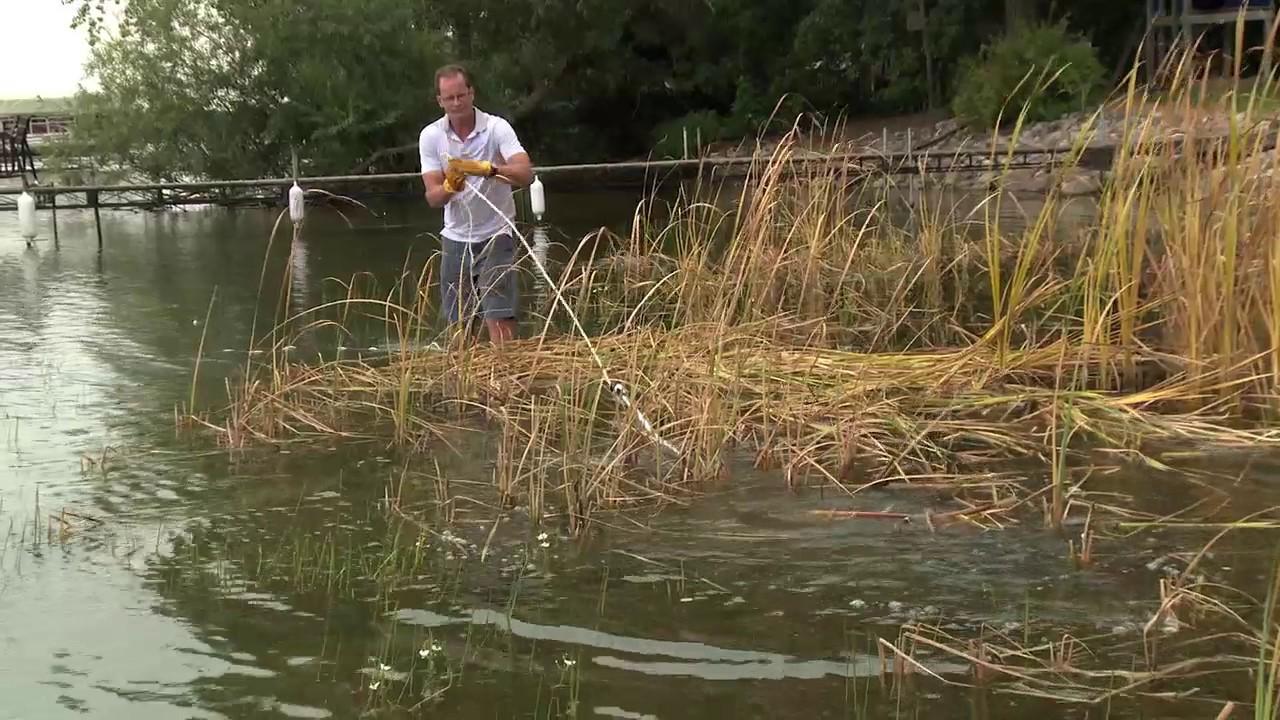 Using WeedRazer Tools Lake Rake - YouTube