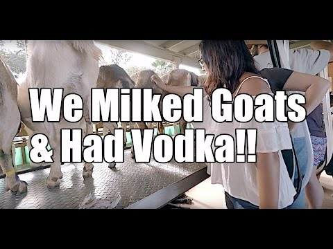 Surfing Goat Cheese Farm and Organic Ocean Vodka Distillery in Maui Hawaii