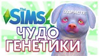 ЧУДО ГЕНЕТИКИ: Кошки и собаки / The Sims 4: Challenge