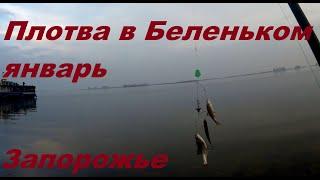 Беленькое клёв плотвы рыбалка в Запорожье 2021