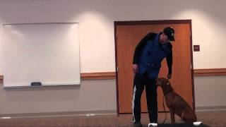 Red (red Bone Coon Hound) - Boot Camp Dog Training Video