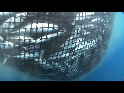 What Is A FAD? Destructive Fishing In Indian Ocean
