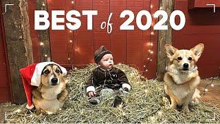 BEST Of 2020 - Bebis & Hundar 💞