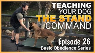 How to Teach Your Dog to STAND on Command. Episode 26
