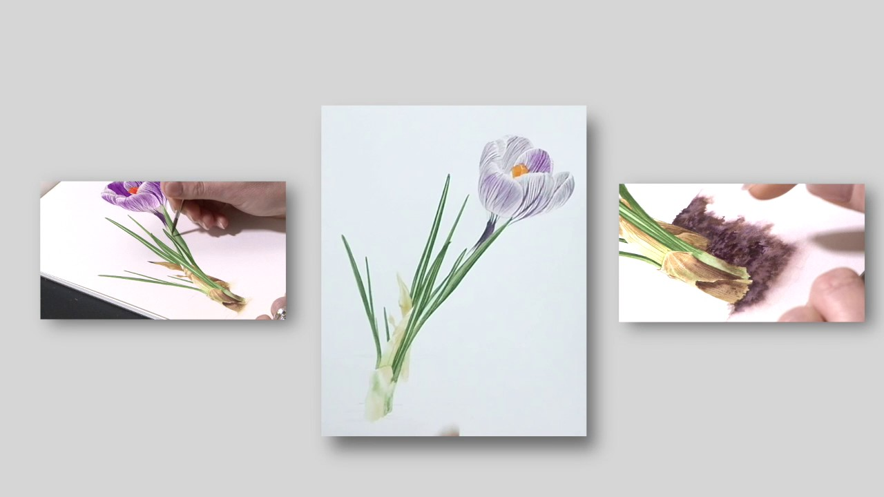 How to paint a striped crocus preview billy showell how to paint a striped crocus preview billy showell watercolour beautiful dhlflorist Image collections