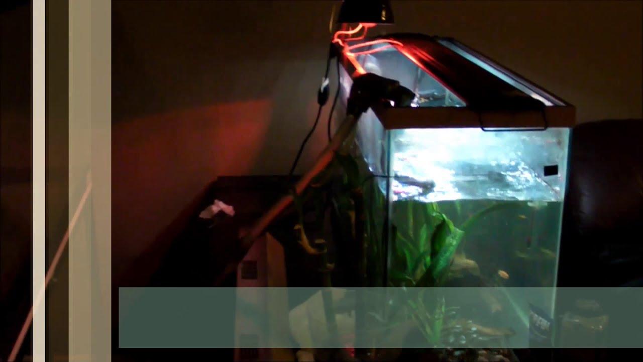 Turtle Tank Decor New 120 Gallon Turtle Tank Setup How To Youtube