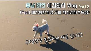 충남 태안 애견펜션 Vlog 2탄(애견동반식당,애견카페…