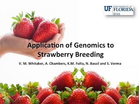 Application of Genomics to Strawberry Breeding