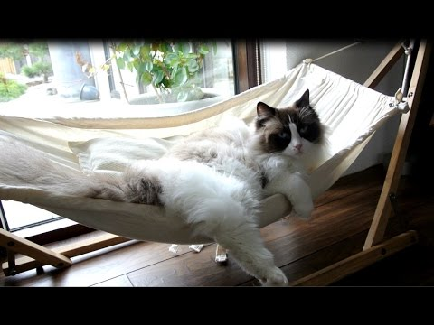 timo-the-cat-and-his-hammock-experiences-(compilation)