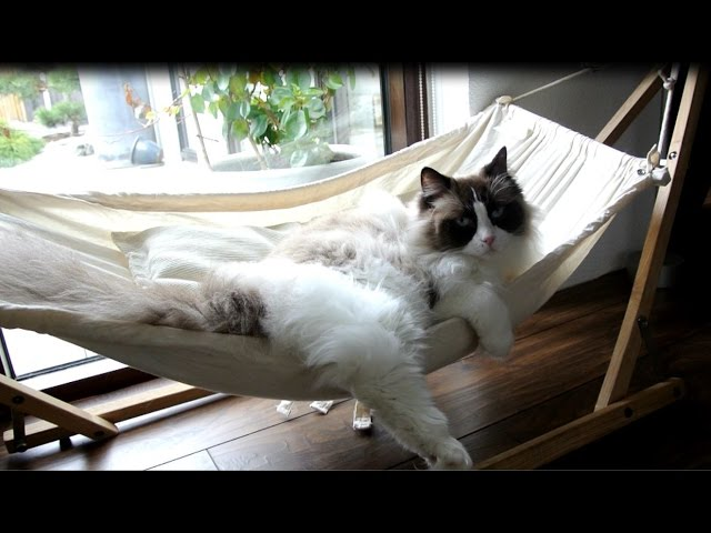 Timo The Cat And His Hammock Experiences (compilation)