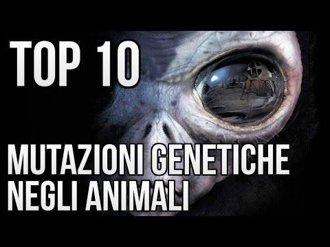 TOP 10 MUTAZIONI GENETICHE NEGLI ANIMALI NON CREDERAI AI TUOI OCCHI!