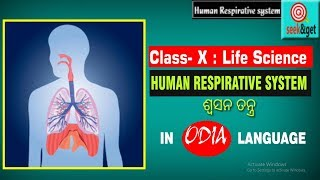 Human respirative system for class 10th life science in odia : ମନୁଷ୍ୟ ର ଶ୍ଵସନ ତନ୍ତ୍ର