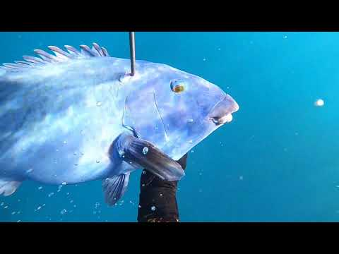 Offshaw Episode 2 Spearfishing Margaret River