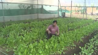 Struggle of farmer Dnyaneshwar Bodke, of integrated farming.