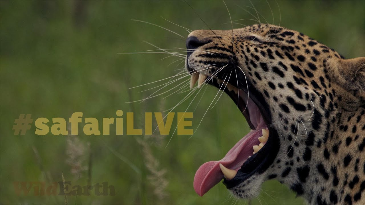 safariLIVE - Sunrise Safari - Jan. 2, 2017 - Nat Geo WILD EP 1