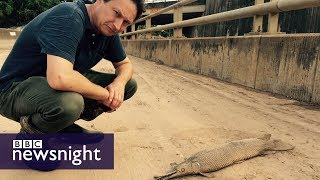 Hurricane Harvey: The aftermath - BBC Newsnight
