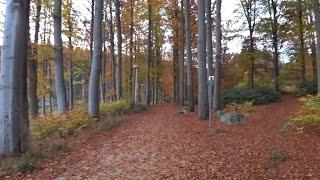 Лесной источник - нас к нему ведет Золотая Осень