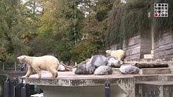 Welt-Eisbären-Tag 2019 - EndZOO sieht keinen Grund zum Feiern!
