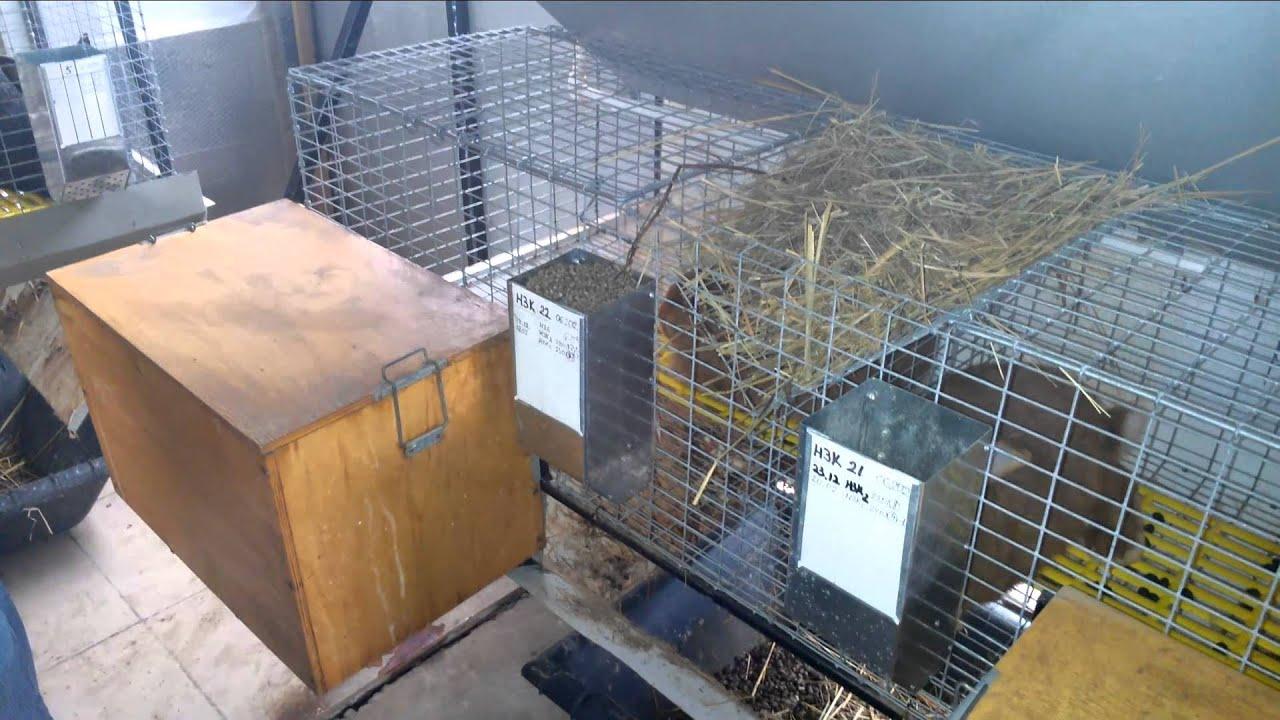 Кормление кроликов в хозяйстве А Салова