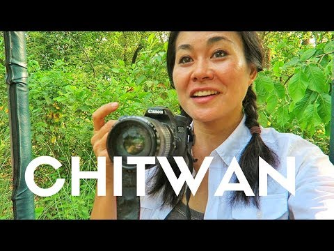 HOLY UNBELIEVABLE! Chitwan National Park WILDLIFE SAFARI at Meghauli Serai