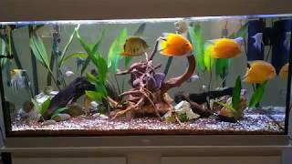 Novo layout do aquário amazônico. Mulheres no aquarismo !!!