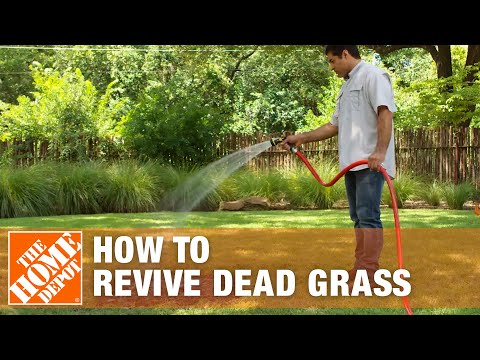How to Grow Grass with Dead Grass Spots | The Home Depot