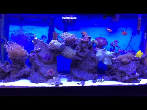 Getting Rid Of The Fish Smell From Your Saltwater Tank