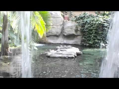 Resort Tour!! Gaylord Palms, Kissimee, FL