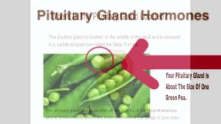 Where Is The Pituitary Gland Located?
