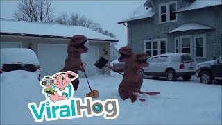 """Occurred on March 1, 2017 """"My neighbors (other adult T rex and daug..."""