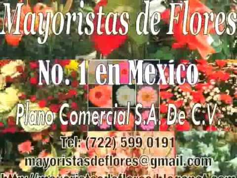 Mayoristas De Flores Youtube