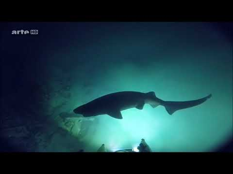 Karibik Doku Tierreich 2018 HD Meeres Dokumentation über Tiere & Pflanzen
