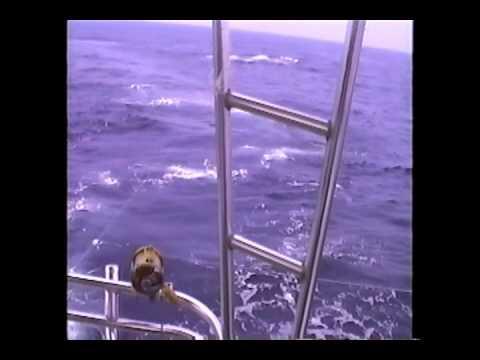 World Record Blue Marlin