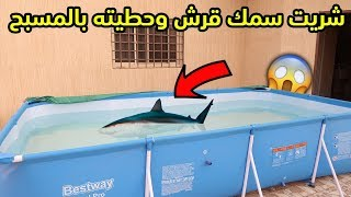 I bought a shark and placed it in the swimming pool | Unexpected experience !!! 🦈😱