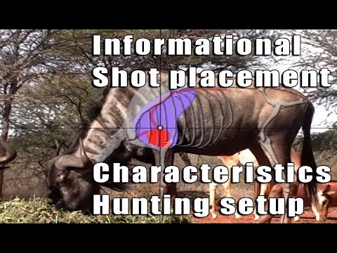 Bow Hunting Blue Wildebeest 02