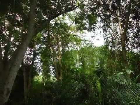 Community protected forests conservation project in Ghana West Africa