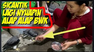 Download lagu MAKANAN KESUKAAN BURUNG ALAP ALAP BWK