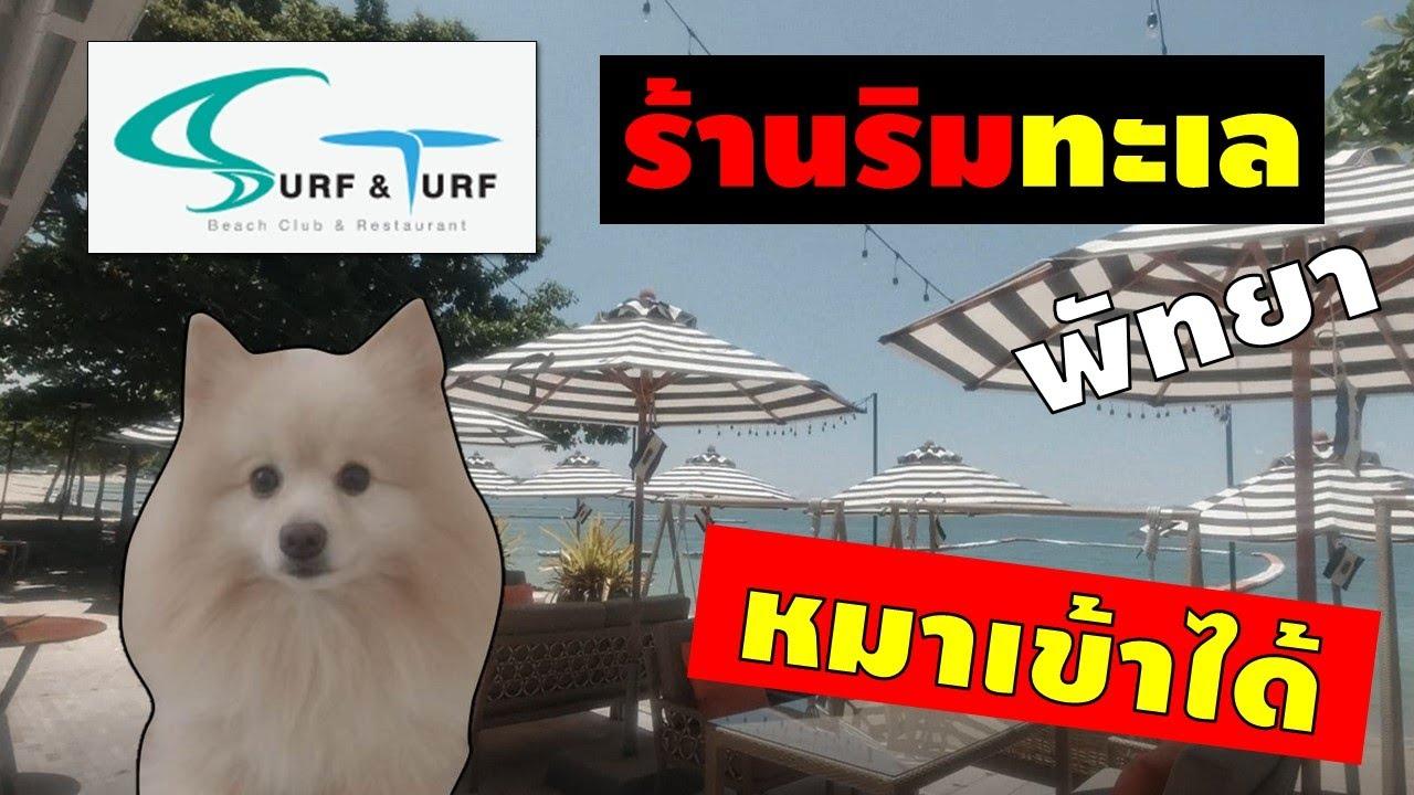ร้านอาหารริมทะเลพัทยา หมาเข้าได้ Surf and Turf Pattaya – 4 Paws Show [EP.11] | ข้อมูลล่าสุดเกี่ยวกับร้าน อาหาร ที่ สุนัข เข้า ได้