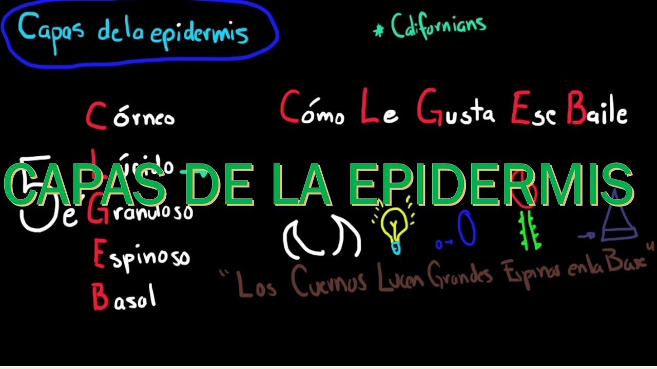 Mnemotecnia para aprender estratos de la epidermis - YouTube