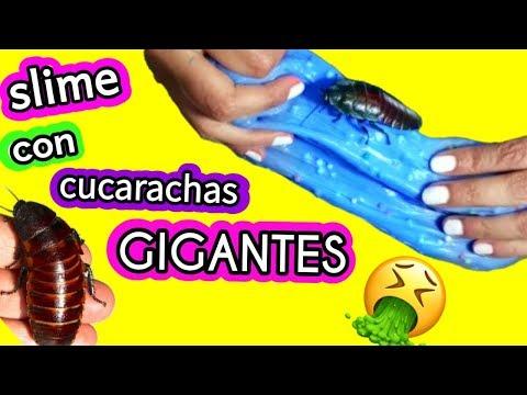 Haciendo slime con CUCARACHAS GIGANTES DE MADAGASCAR