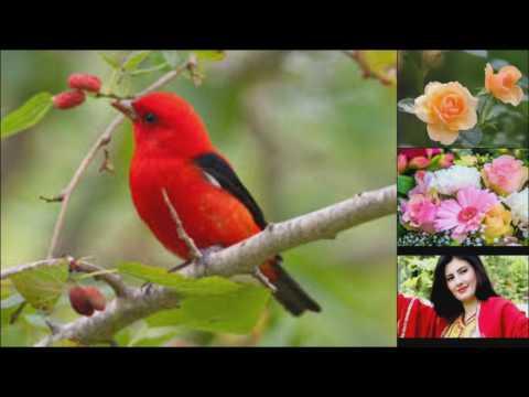 Nazia Iqbal Pashto Mast Song Dak Zari Ma Daidaisha thumbnail