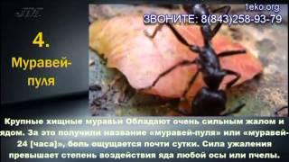 Как уничтожить тараканов в квартире?(Как уничтожить тараканов в квартире и дома Звоните: 8(843) 258-93-79., 2013-08-01T08:32:19.000Z)