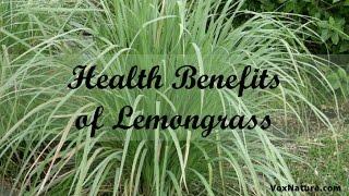 Helth Benefits of Lemon-grass || herbal plant