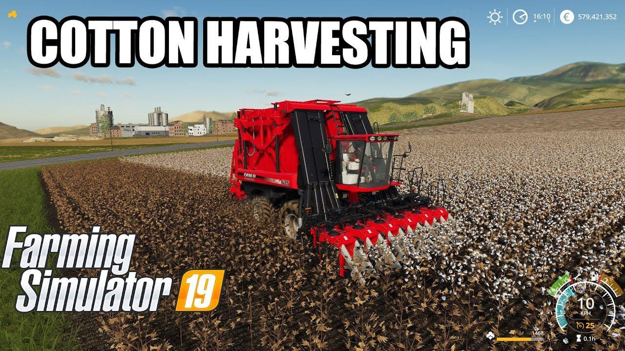 Farming Simulator 19 | COTTON HARVESTING & TRANSPORTING