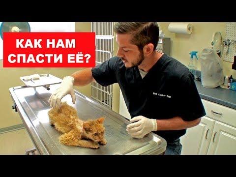 КОШКА ПОТРАТИЛА ПОЧТИ ВСЕ ЖИЗНИ. (В грудной клетке была печень) Ветеринарное ранчо на русском