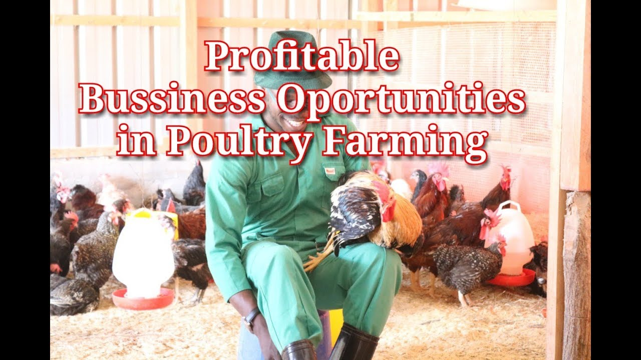 Profitable Business Opportunities In Poultry Farming I Chicken Farming