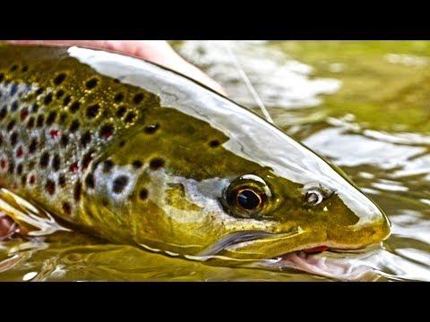 Fly Fishing Grasshopper paradise - Slovakia