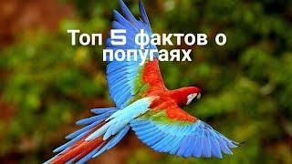 ТОП 5 ФАКТОВ О ПОПУГАЯХ/5 интересных фактов о попугаях/ #рисункидляконкурса HAPPY HAMSTERS