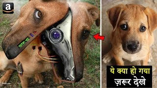 Top 5 Incredibles Pet Gadgets You can Buy on Amazon 🐶Gadgets for Pets in Hindi ▶Gadgets Under Rs500